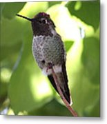 Hummingbird Hangout Metal Print