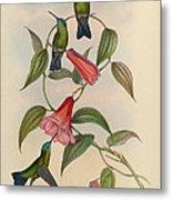 Hummingbirds Metal Print by Philip Ralley