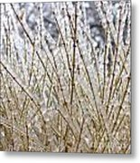 Ice On Branches Metal Print