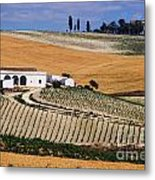 In A Vineyard Metal Print