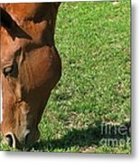 In Green Pasture Metal Print