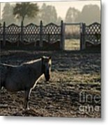 In The Frosty Morning Metal Print