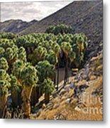Indian Canyons - California Metal Print