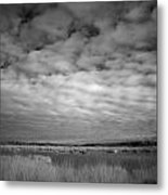 Infrared Picture Of The Nature Area Dwingelderveld In Netherlands Metal Print