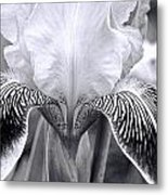 Iris 11 Metal Print