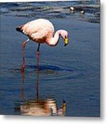 James Or Puna Flamingo Metal Print