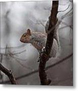 Jumping Squirrel Metal Print