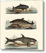Kinds Of Whales Metal Print
