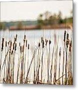 Lake Mattamuskeet Nature Trees And Lants In Spring Time  Metal Print
