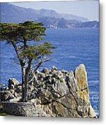 Lone Cypress Tree Metal Print