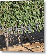 Lorimar Grapes Metal Print