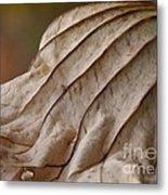 Lotus Leaf Metal Print