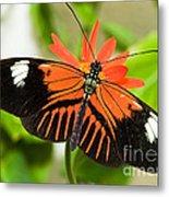 Madeira Butterfly Metal Print