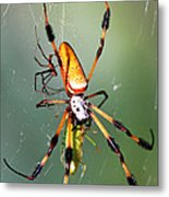 Male And Female Silk Spiders With Prey Metal Print