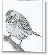 Male House Finch Sketch  Metal Print