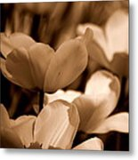 Many Tulips Metal Print