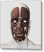 Medical Illustration Of Male Facial Metal Print