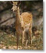Mesopotamian Fallow Deer  Metal Print