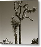 Joshua Tree National Park Landscape No 2 In Sepia Metal Print