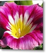 Morning Glory Named Red Ensign Metal Print