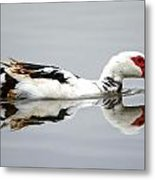 Muscovy Water Reflection Metal Print