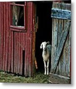 My Little Friend Metal Print by Diana Angstadt
