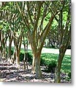 Norfolk Botanical Garden 6 Metal Print