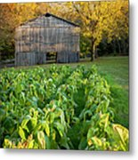 Old Tobacco Barn Metal Print by Brian Jannsen