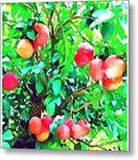 Orange Trees With Fruits On Plantation Metal Print