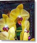 Orchid Flowers Growing Through Old Wooden Picture Frame Metal Print