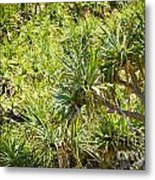 Pandanus Palm Tree Metal Print