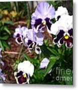 Pansy From The Chalon Supreme Primed Mix Metal Print