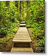 Path In Temperate Rainforest Metal Print
