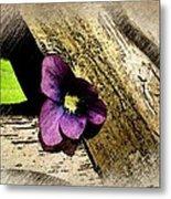 Peeking Violet Metal Print