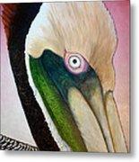 Pelican Peeking Metal Print
