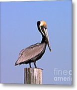 Pelican Perch Metal Print