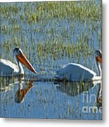 Pelicans In Hayden Valley Metal Print