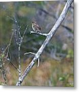 Perched Metal Print