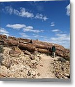 Petrified Forest, Argentina Metal Print