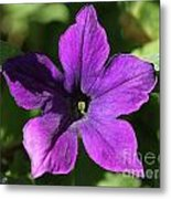 Petunia Hybrid From The Sparklers Mix Metal Print