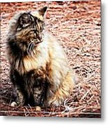 Pine Needle Kitty Metal Print