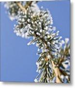Pine Tree Branch Metal Print
