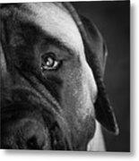 Portrait Of A Mastiff Metal Print