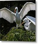 Prepare For Flight Metal Print