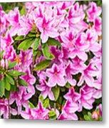 Pretty In Pink - Spring Flowers In Bloom. Metal Print