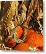 Pumpkin Harvest Metal Print