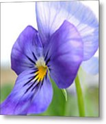 Purple And Blue Viola Metal Print