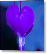 Purple Bleeding Heart Flower Metal Print