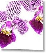 Purple Orchid-5 Metal Print