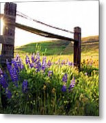 Purple Wildflowers Metal Print